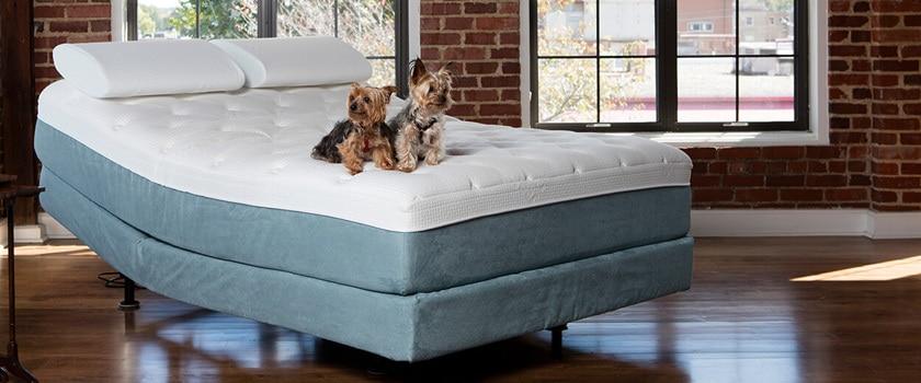 bedinabox mattress adjustable beds