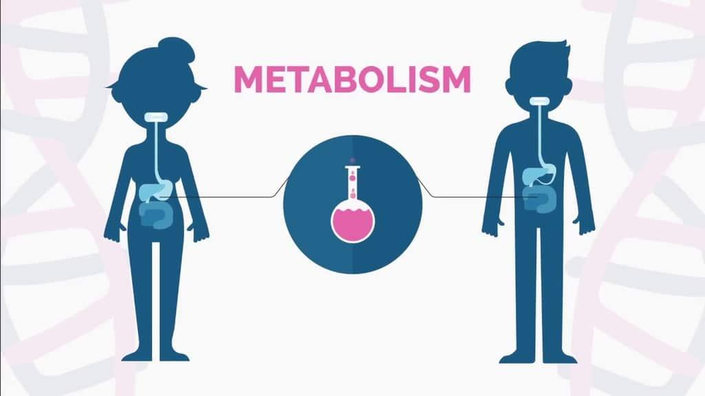 Metabolic Disorder-Delayed Sleep Phase Syndrome
